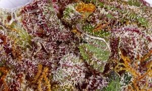 unweeding_5_final_purple_haze