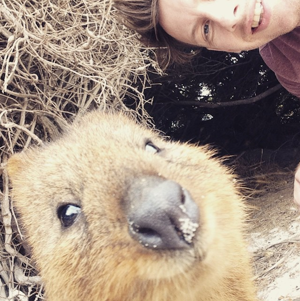 Quokka_Selfies_Meet_the_Worlds_happiest_Animal_on_Instagram_2015_08