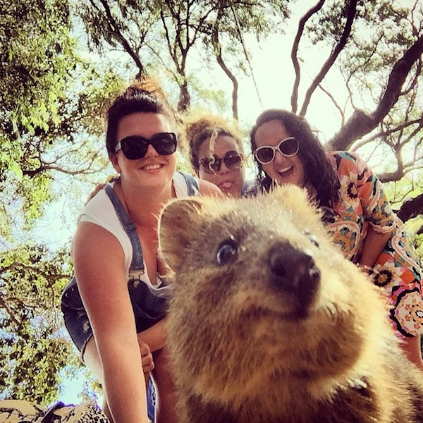 Quokka_Selfies_Meet_the_Worlds_happiest_Animal_on_Instagram_2015_09