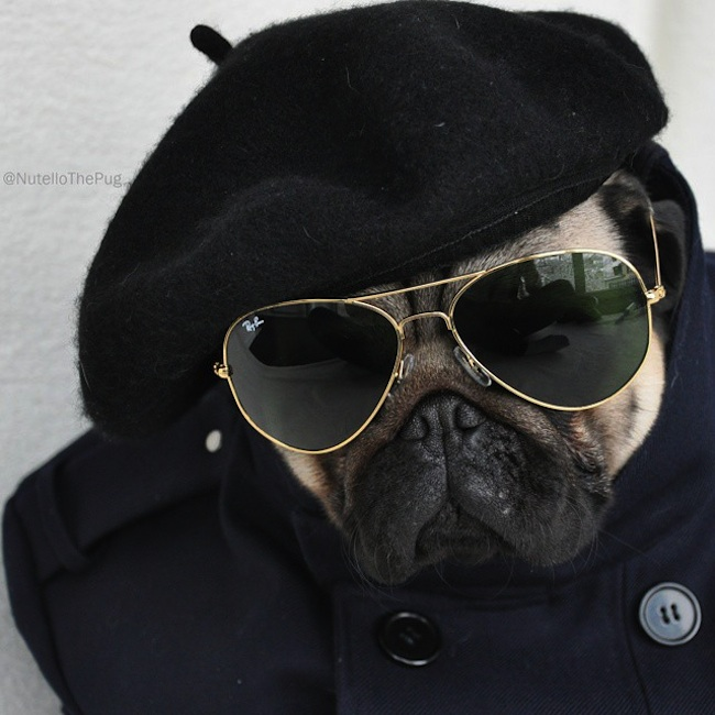 Meet_Nutello_the_Pug_One_of_the_Most_Fashionable_Dogs_on_Instagram_2015_01