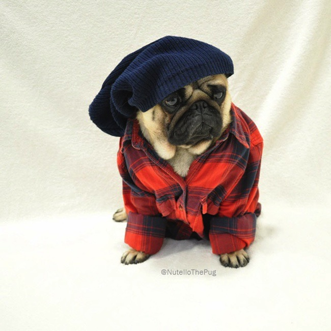 Meet_Nutello_the_Pug_One_of_the_Most_Fashionable_Dogs_on_Instagram_2015_03