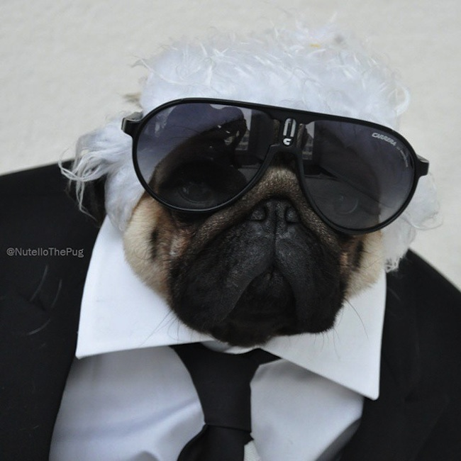 Meet_Nutello_the_Pug_One_of_the_Most_Fashionable_Dogs_on_Instagram_2015_04