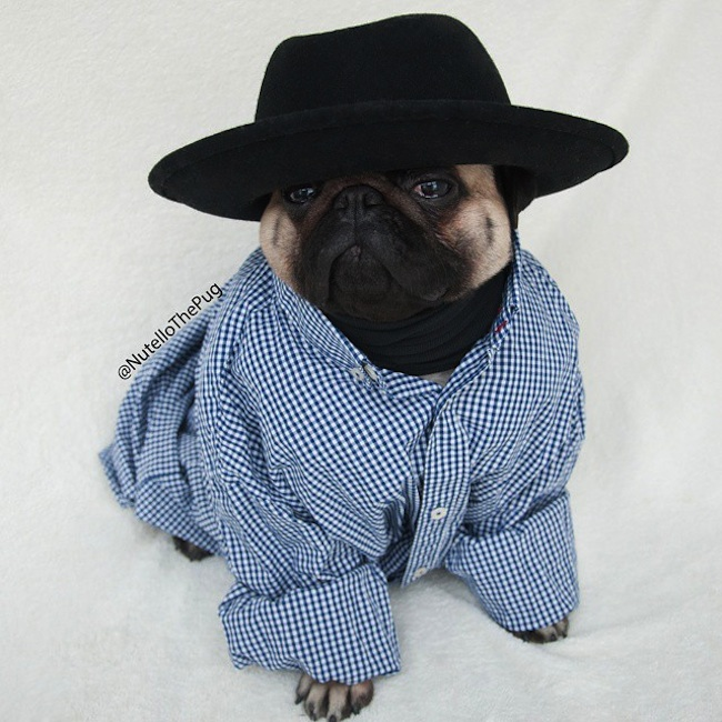 Meet_Nutello_the_Pug_One_of_the_Most_Fashionable_Dogs_on_Instagram_2015_07