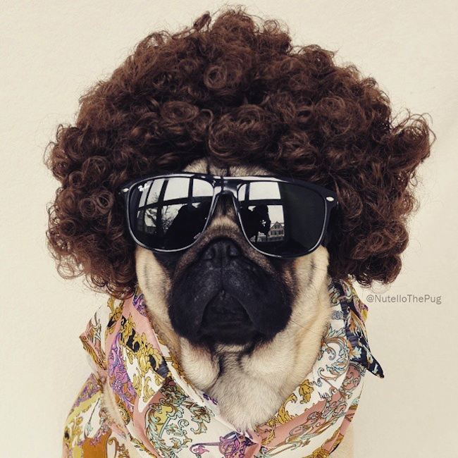Meet_Nutello_the_Pug_One_of_the_Most_Fashionable_Dogs_on_Instagram_2015_08