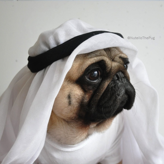 Meet_Nutello_the_Pug_One_of_the_Most_Fashionable_Dogs_on_Instagram_2015_11