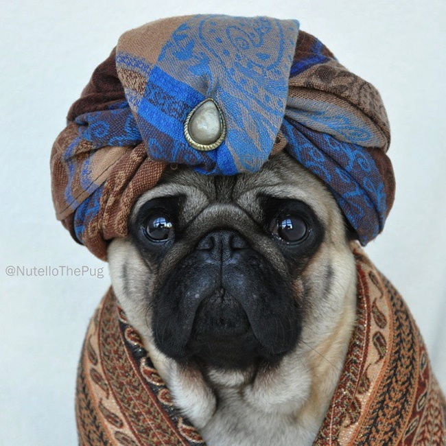 Meet_Nutello_the_Pug_One_of_the_Most_Fashionable_Dogs_on_Instagram_2015_12