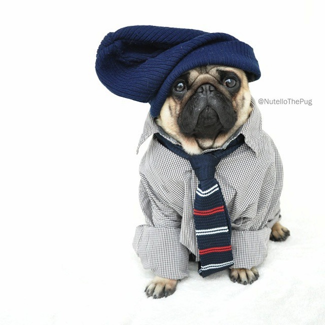 Meet_Nutello_the_Pug_One_of_the_Most_Fashionable_Dogs_on_Instagram_2015_13