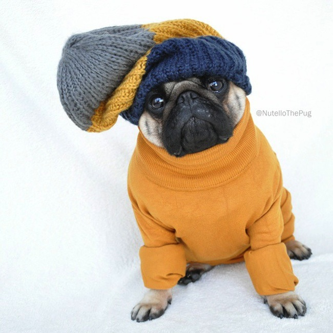 Meet_Nutello_the_Pug_One_of_the_Most_Fashionable_Dogs_on_Instagram_2015_16