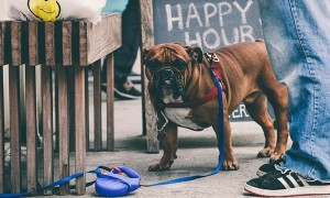 Leashes_Longing_Tied_Up_Dog_in_the_Streets_of_New_York_City_by_Erik_Carter_2015_header