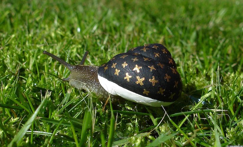 Stefansiverud-snailpimp-snail-art-01