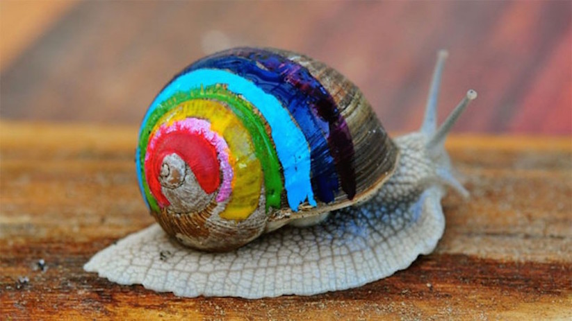 Gallery For gt Snail Art