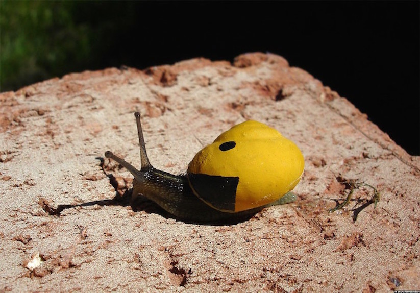 Stefansiverud-snailpimp-snail-art-10