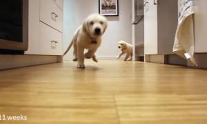 pups_running_dinner_01
