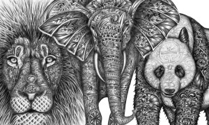 Amazing_Detailed_Animal_Doodles_Created_by_Artist_Faye_Halliday_2015_header