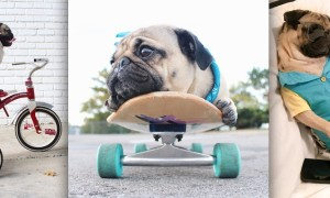 Doug_the_Pug_One_of_the_most_Cutest_Dogs_of_Instagram_2015_header