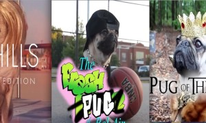 Doug_the_Pug_Adorably_Recreates_Classic_TV_Show_Intros_2015_header