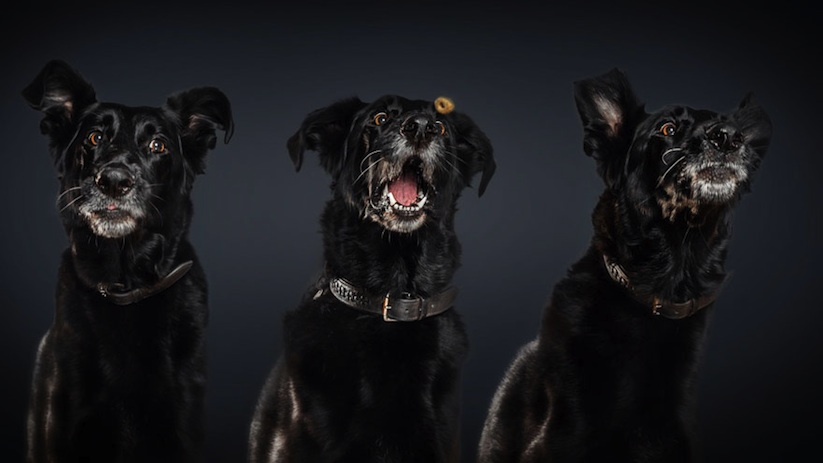 Hungry_Dogs_Captured_While_Trying_to_Catch_Snacks_by_Photographer_Christian_Vieler_2015_01