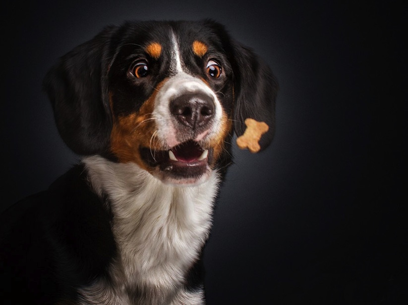 Hungry_Dogs_Captured_While_Trying_to_Catch_Snacks_by_Photographer_Christian_Vieler_2015_04