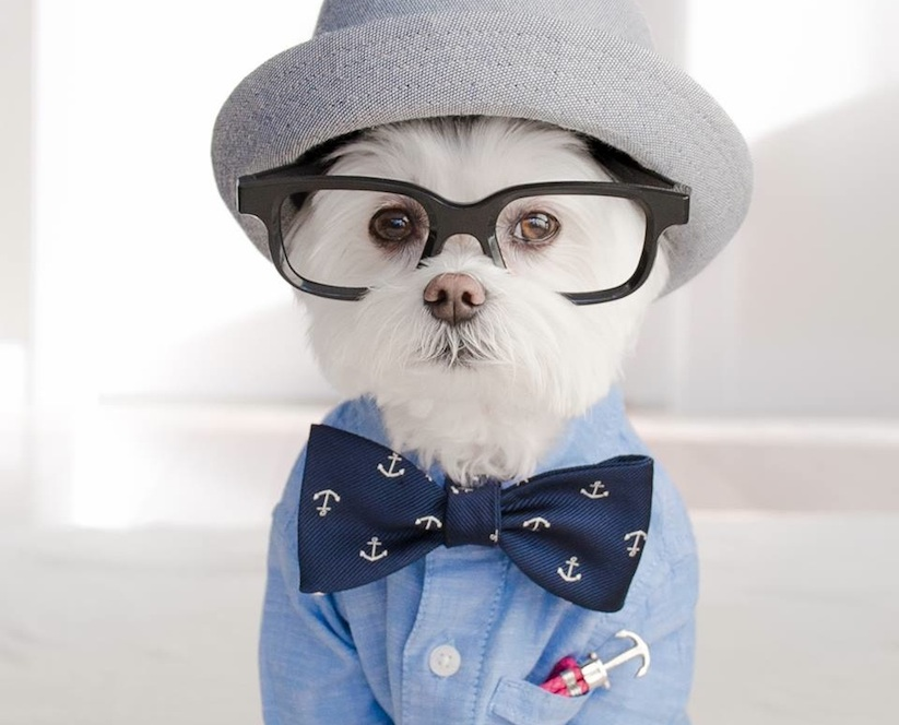 Meet_Toby_LittleDude_The_Charming_Hipster_Dog_Of_Instagram_with_Attitude_2016_01
