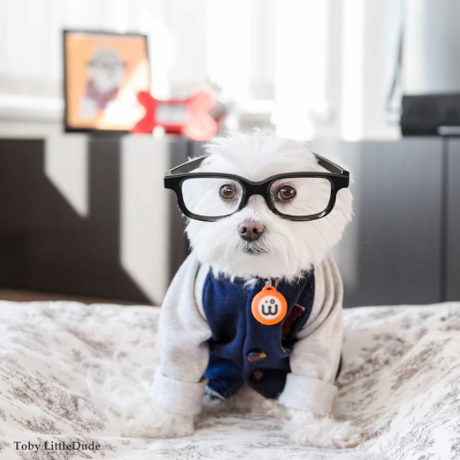 Meet_Toby_LittleDude_The_Charming_Hipster_Dog_Of_Instagram_with_Attitude_2016_02
