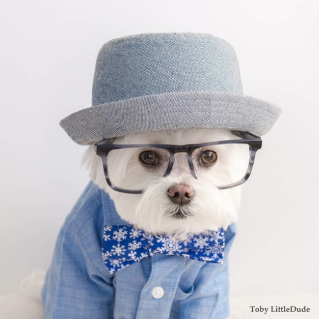 Meet_Toby_LittleDude_The_Charming_Hipster_Dog_Of_Instagram_with_Attitude_2016_06