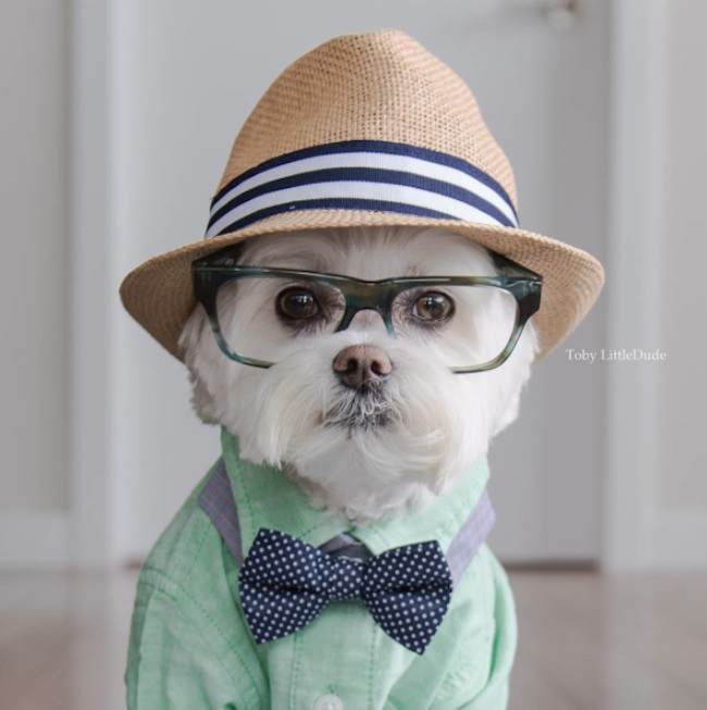 Meet_Toby_LittleDude_The_Charming_Hipster_Dog_Of_Instagram_with_Attitude_2016_09