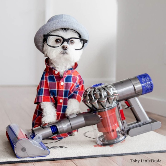 Meet_Toby_LittleDude_The_Charming_Hipster_Dog_Of_Instagram_with_Attitude_2016_10
