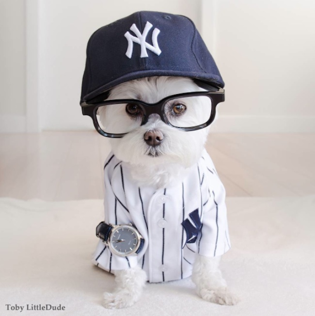 Meet_Toby_LittleDude_The_Charming_Hipster_Dog_Of_Instagram_with_Attitude_2016_11