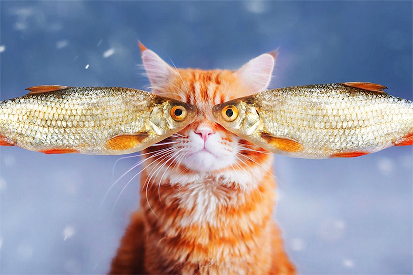 Meet_Kotleta_The_Majestic_Ginger_Cat_of_Russian_Photographer_Kristina_Makeeva_2016_01