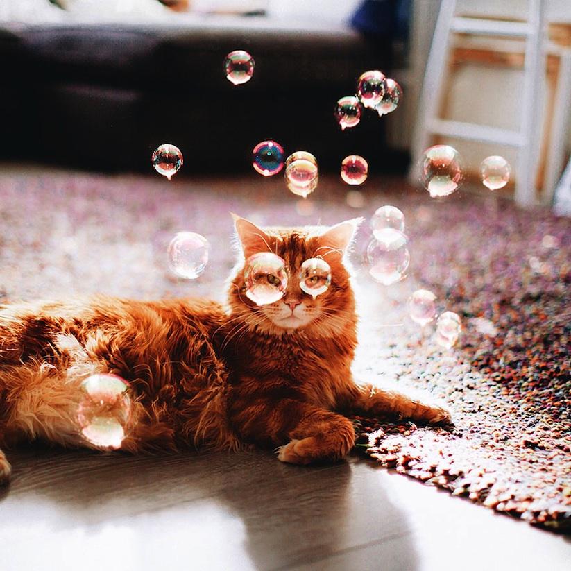 Meet_Kotleta_The_Majestic_Ginger_Cat_of_Russian_Photographer_Kristina_Makeeva_2016_03
