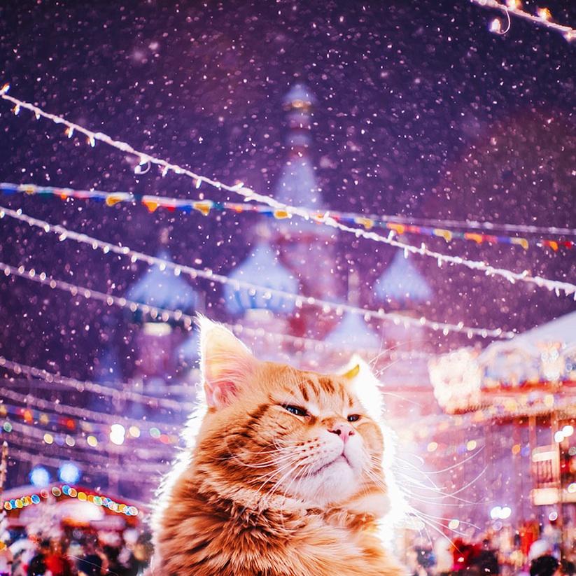 Meet_Kotleta_The_Majestic_Ginger_Cat_of_Russian_Photographer_Kristina_Makeeva_2016_04