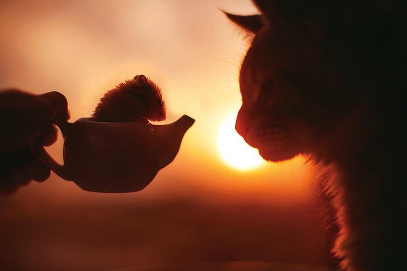 Meet_Kotleta_The_Majestic_Ginger_Cat_of_Russian_Photographer_Kristina_Makeeva_2016_05