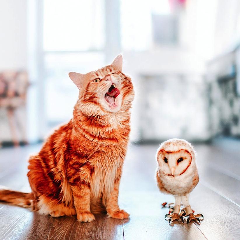 Meet_Kotleta_The_Majestic_Ginger_Cat_of_Russian_Photographer_Kristina_Makeeva_2016_06