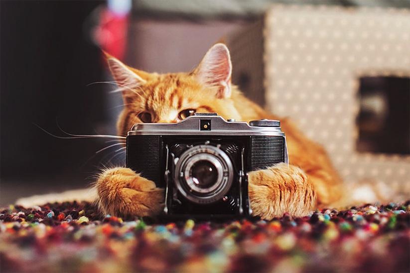 Meet_Kotleta_The_Majestic_Ginger_Cat_of_Russian_Photographer_Kristina_Makeeva_2016_08