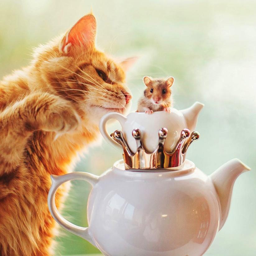 Meet_Kotleta_The_Majestic_Ginger_Cat_of_Russian_Photographer_Kristina_Makeeva_2016_09
