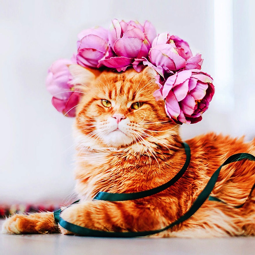 Meet_Kotleta_The_Majestic_Ginger_Cat_of_Russian_Photographer_Kristina_Makeeva_2016_12