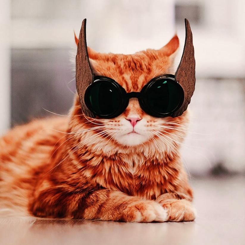 Meet_Kotleta_The_Majestic_Ginger_Cat_of_Russian_Photographer_Kristina_Makeeva_2016_14