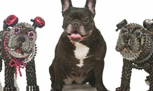Unchained_Dogs_Dog_Sculptures_Created_From_Bicycle_Chains_by_Artist_Nirit_Levav_2016_header