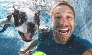 Underwater_Dogs_by_Seth_Casteel_2016_header