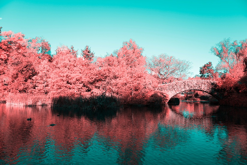 INFRARED_NYC_Central_Park_Captured_from_a_Different_Perspective_by_Paolo_Pettigiani_2016_03