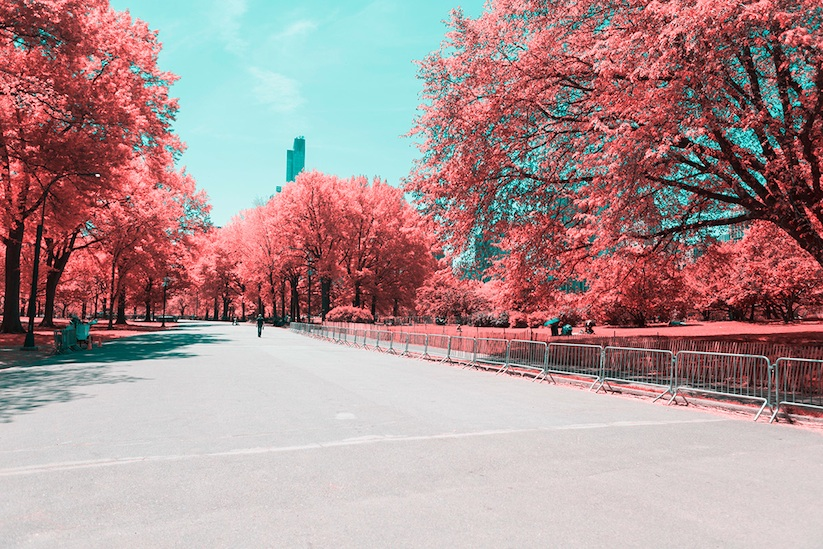 INFRARED_NYC_Central_Park_Captured_from_a_Different_Perspective_by_Paolo_Pettigiani_2016_07