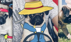 Meet_Monsieur_Georges_Two_Designerns_Love_To_Doodle_On_Their_Adorable_Tiny_Pugs_Face_2016_header