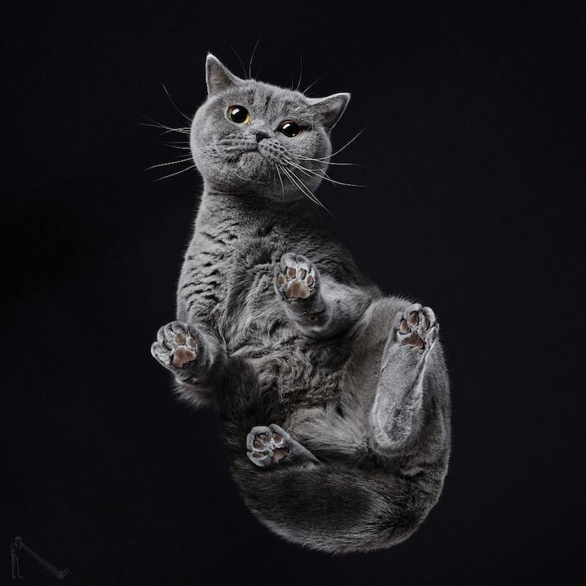 Under_Cats_by_Andrius_Burba_2017_03