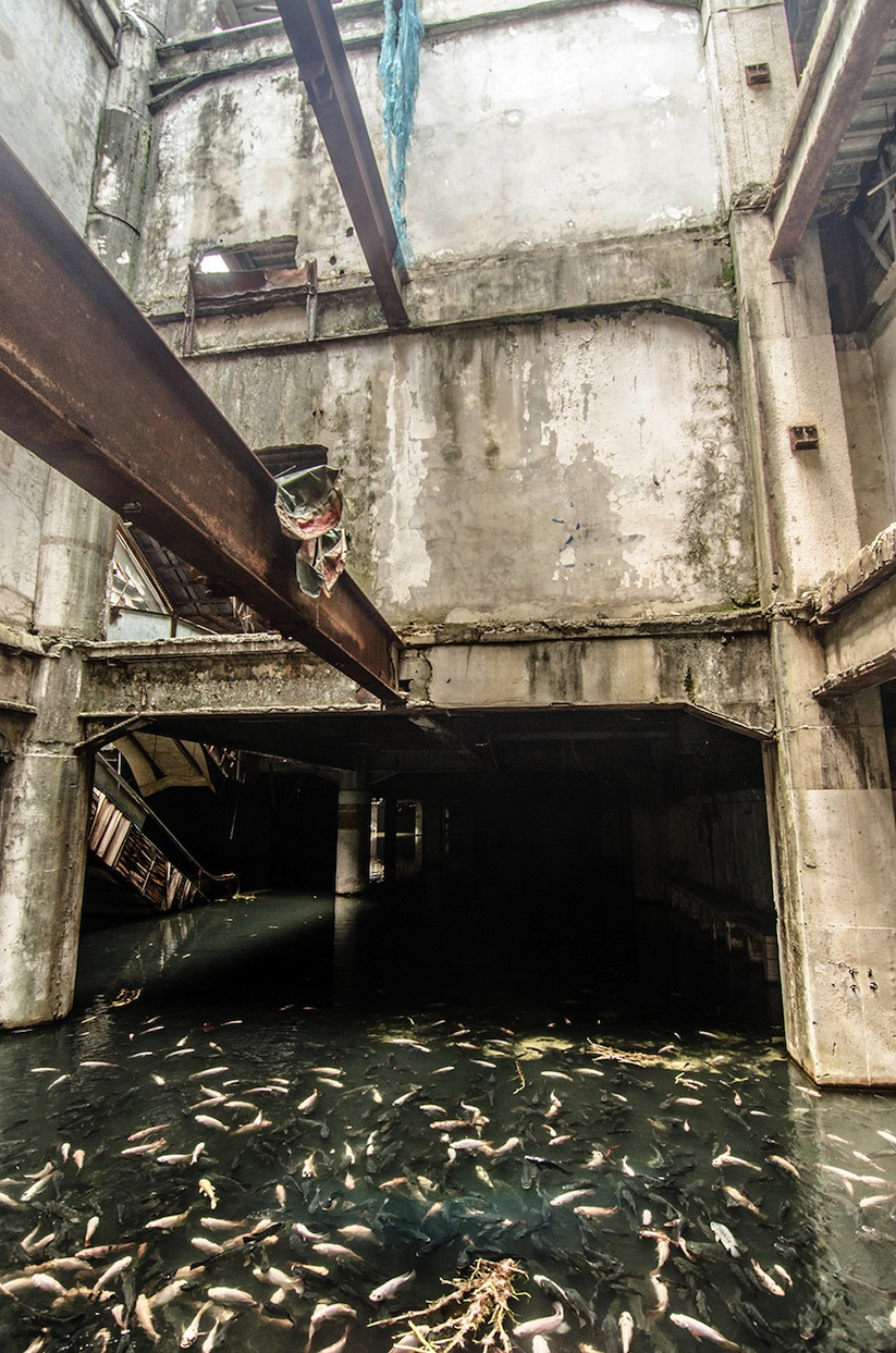 Abandoned_Shopping_Mall_In_Bangkok_Has_Been_Taken_Over_By_Fish_2014_07