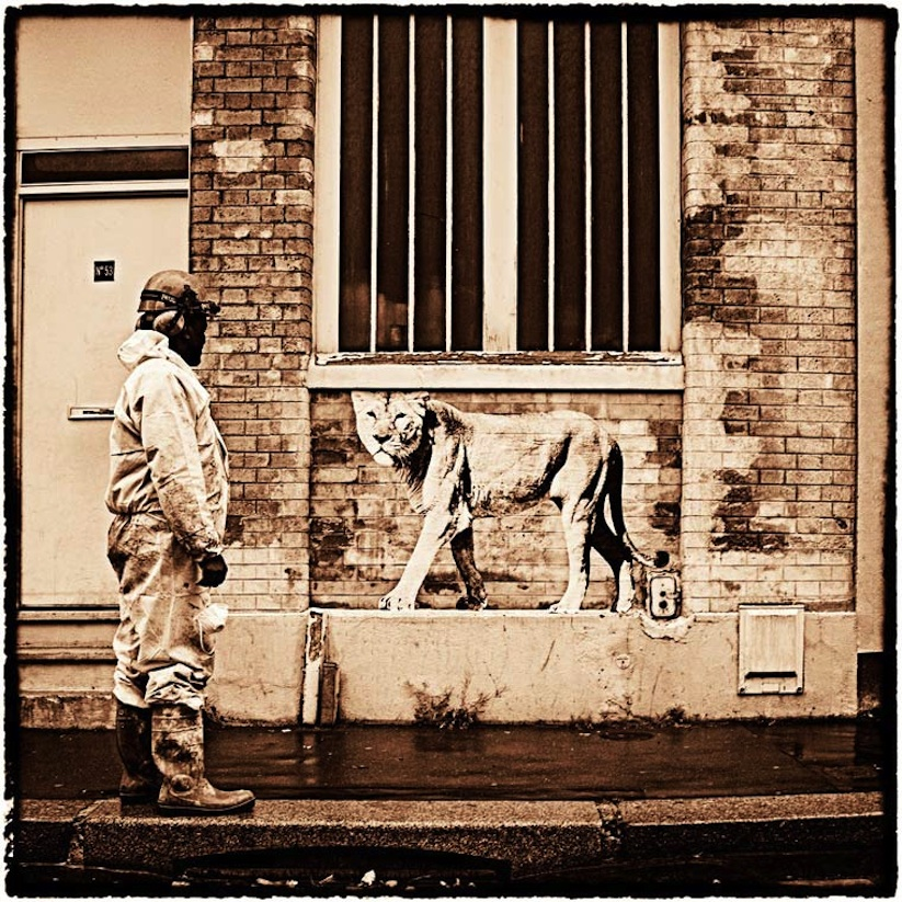 Animetro_Animals_on_the_streets_of_Paris_by_Sophie_Photographe_2014_11