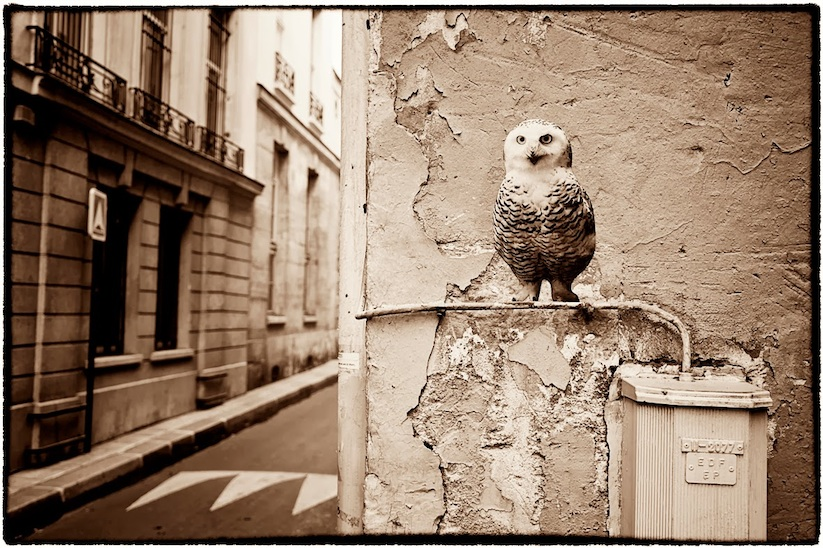 Animetro_Animals_on_the_streets_of_Paris_by_Sophie_Photographe_2014_12