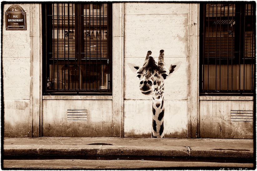 Animetro_Animals_on_the_streets_of_Paris_by_Sophie_Photographe_2014_13