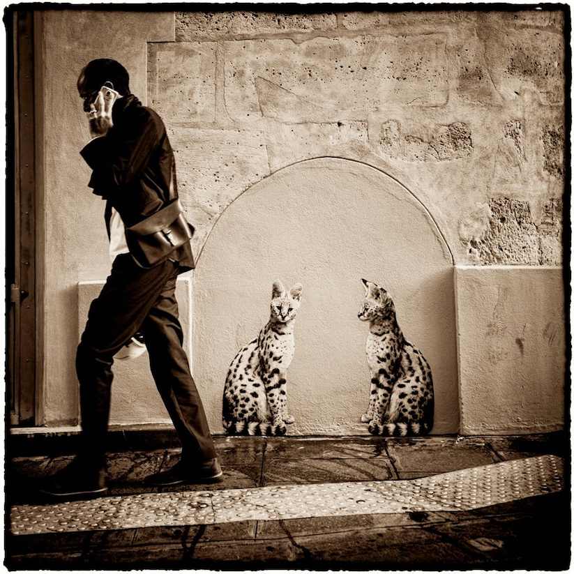 Animetro_Animals_on_the_streets_of_Paris_by_Sophie_Photographe_2014_16