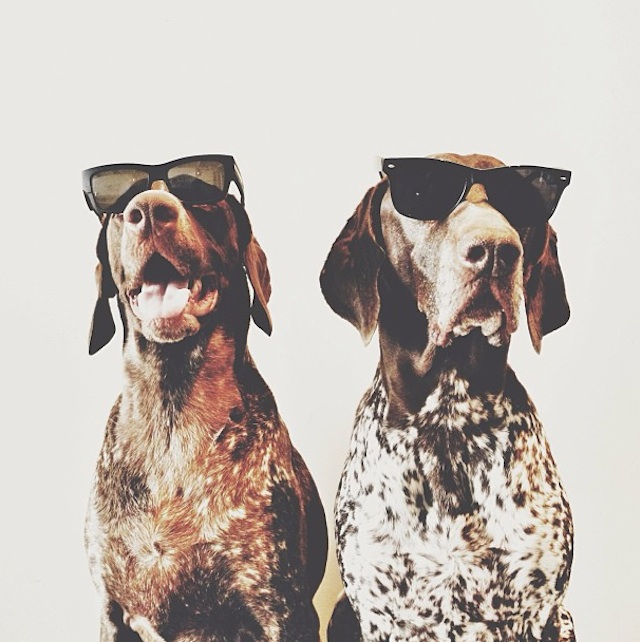 Gus_and_Travis_Dogs_01