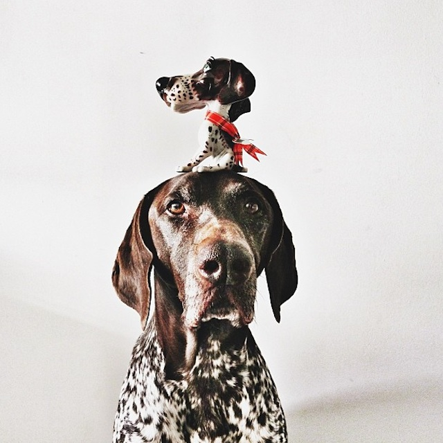 Gus_and_Travis_Dogs_09